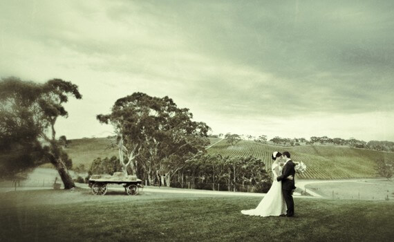 Longview Vineyards Photography Adelaide Panache Weddings